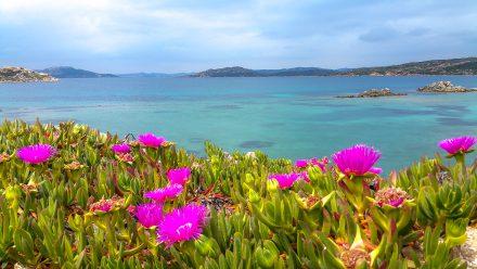 Nord de la Sardaigne